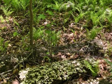 Fern and lichen.