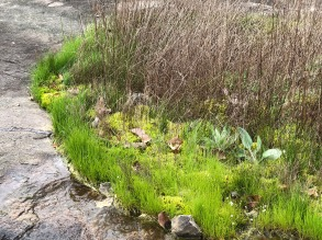 MVT grasses and moss
