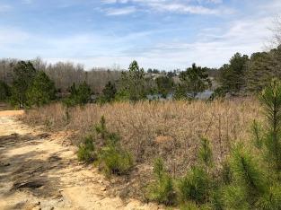 MVT trail along lake