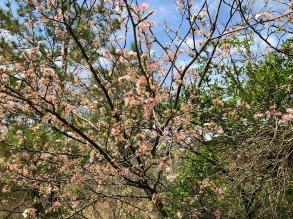 MVT trees at lake