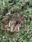 MVTdetailforestplant