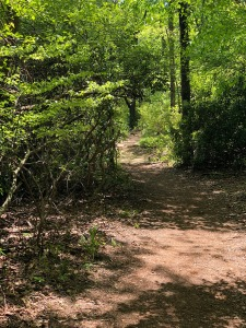 Trail alongside