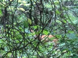A doe through the woods.