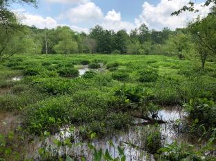 The spring marshland.